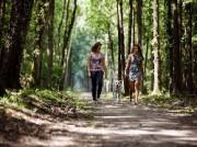 Voorbeeld afbeelding van Bungalow, vakantiehuis RCN Vakantiepark de Jagerstee in Epe