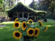 Voorbeeld afbeelding van Kamperen Natuurcamping Voscheheugte in Mantinge