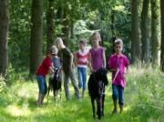 Voorbeeld afbeelding van Kamperen Camping & Geitenkaasboerderij De Brommels in Winterswijk