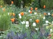 Voorbeeld afbeelding van Tuinen, Kunsttuinen De Goldhoorn Gardens in Bant