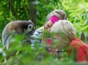 Voorbeeld afbeelding van Dierentuin Dierenpark Apenheul in Apeldoorn
