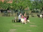 Voorbeeld afbeelding van  Boerderij bezoek,Kinderboerderij Stadsboerderij De Vosheuvel in Amersfoort