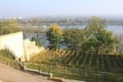 Voorbeeld afbeelding van Wijngaard, wijnproeverij Wijngaard Slavante in Maastricht