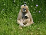Voorbeeld afbeelding van Dierentuin Zoo Parc Overloon in Overloon