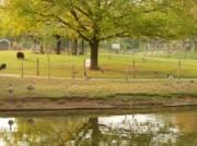 Voorbeeld afbeelding van  Boerderij bezoek,Kinderboerderij Kinderboerderij De Schouw in Zutphen
