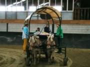 Voorbeeld afbeelding van Paardrijden, Manege, Huifkar Huifbedrijden De Bevelanden in Kamperland