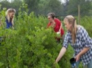 Voorbeeld afbeelding van Tuinen, Kunsttuinen Zelfplukfruitgaard De Hagen in Haulerwijk