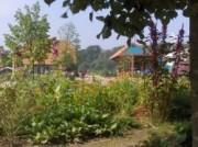 Voorbeeld afbeelding van  Boerderij bezoek,Kinderboerderij De Ulebelt in Deventer
