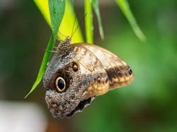 Logo van Klein Costa Rica Tropische Vlindertuin