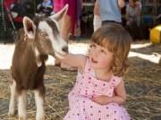 Voorbeeld afbeelding van  Boerderij bezoek,Kinderboerderij Kinderboerderij Hagerhof in Venlo